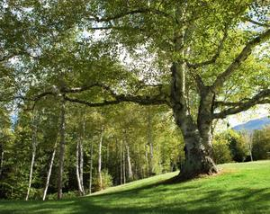 Tree Service Pros - Lincoln, Nebraska